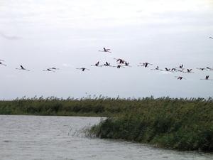 Shirivan Flamingo Lake